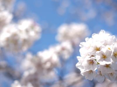 清澄白河の桜スポット 清澄白河駅の美容院eyesburg アイスバーグ